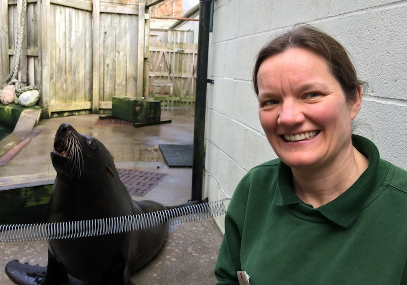 https://www.southbristolvoice.co.uk/images/Apr 18/Rowena Killick with fur seal at Bristol Zoo Gardens