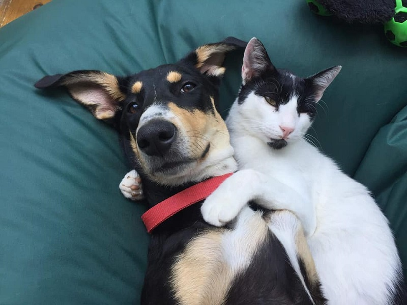 Oscar the cat with Casey the dog - both rescued in Greece