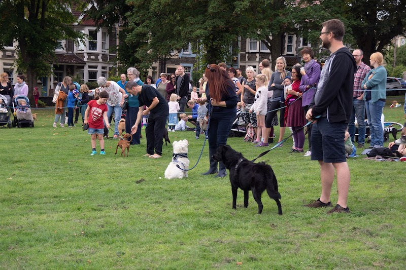 Lining up at the dog show in Victoria Park